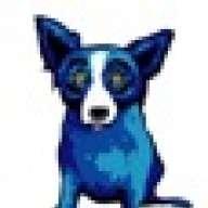 bluedoggiant
