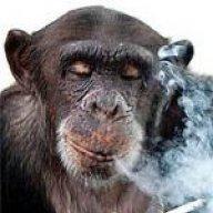 chimpboy74