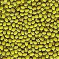 Yellowbean12