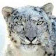 SnowLeopard2008