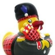 ScottishDuck