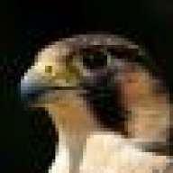 falconeight