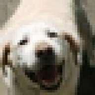 netdog