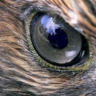 Hawk999
