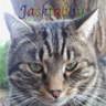 jacktabby