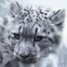 snowleopardxman