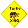 turtle2472